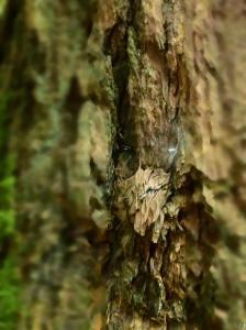 A tree's genius loci