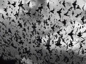 bat-swarm
