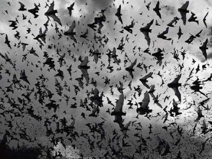 Image result for D&D swarm of Bats